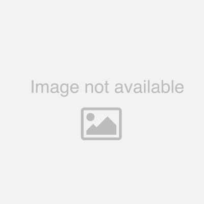 CR2430 3V Lithium Coin Cell Blister of 1